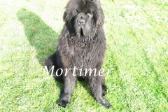 Mortimer chien de Paul