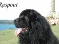 Raspout